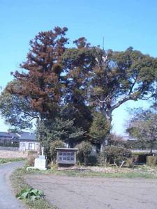 頓田の森の木